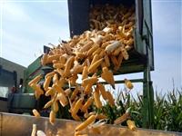 雷肯玉米收割机