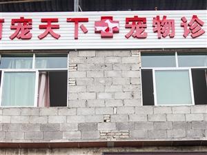 彭水县宠物诊所9年老字号