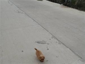 寻找丢失小狗