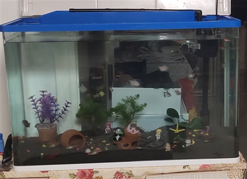 80×80高清鱼缸     买来2个月因工作调动外地,    诚心诚意的请来电