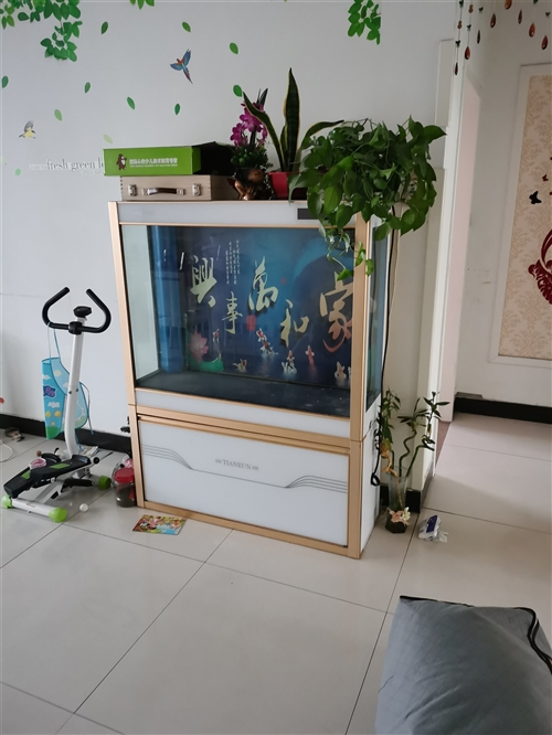 天润底滤**鱼缸因搬家低价处理,泰华海龙水族购买,过滤效果好,闲置差不多就处理了尺寸1.2米*0.8...