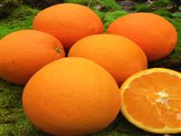 【邻水脐橙】产地直供!大果10斤装58元包邮,20斤装108元包邮!