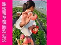 新鲜奶油草莓限时采摘!