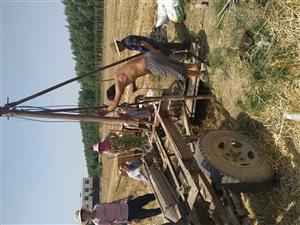淘井,麦收夏种,抗旱
