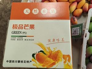 可河自家种的芒果