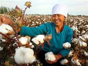 新疆棉花加工,老医院旁边
