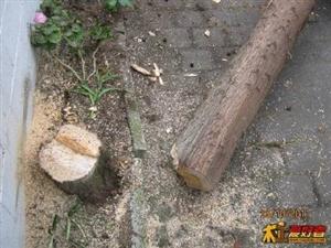 淄博收树伐树修树