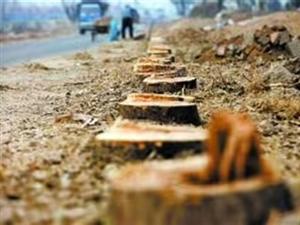 淄博,收树,伐树,修树
