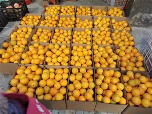 赣南脐橙自家果园现采现发