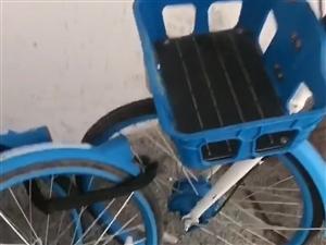 共享单车都去了哪里