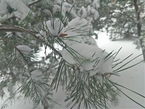 白雪已嫌春色晚,四月飘飞作春花!