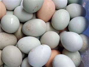 乌骨鸡蛋,散养土鸡,绿壳鸡蛋
