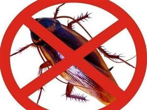 灭蟑螂,除虫除蚂蚁,安全环保价格优惠