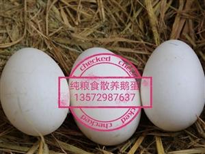 纯粮食散养鹅蛋出售