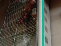 處理一臺2米5冷藏柜,價格面議,聯系電話13849037670,非誠勿擾,地址杞縣葛崗鎮