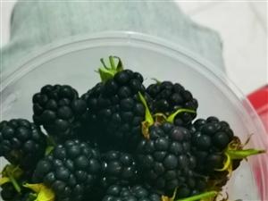 黑树莓——生命之神