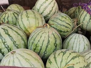 无籽西瓜一元一个,六至八斤,十个县城配送。