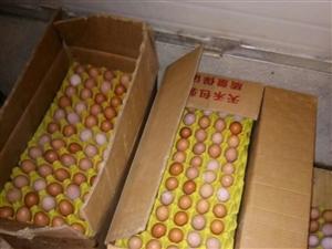 乐安县蛋鸡养殖场直供、拒绝冷库蛋、散黄蛋