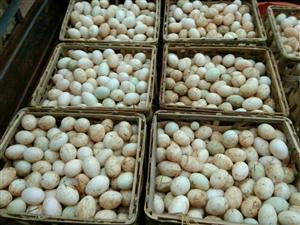 鸡鸭蛋批发零售