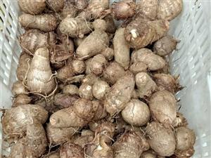 自家種植的芋頭出售