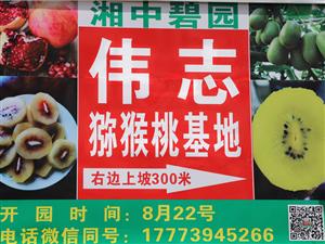 邵东市伟志猕猴桃基地